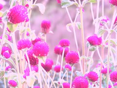 Flower (mirei24) Tags: pink flower color   lovelyflickr
