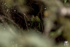 Cotorras (andrea.prave) Tags: jardbotnichistric giardinibotanici jardbotnic garden parrots pappagalli loros perroquets papageien   cotorras olimpic olimpiadi 1992 barcellona catalogna spagna espana catalua catalonha reinodeespaa espaa hispania spain catalunya spanien espagne