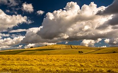 Out here in the fields... (AlbOst) Tags: fields crops wheat mowed clouds skies fife scotland landscapes