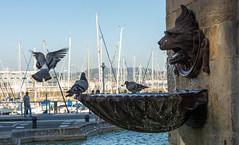 El primer bao de la maana (felipemadroal) Tags: flickr ciudad calles nikon d5200 fuente gijon puerto deportivo cimadevilla