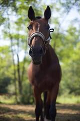 My horse Megan (silvia_mozzon) Tags: 14 50mm canonfd manualfocus alpha7 sony ranch maneggio larosta nature natura equitazione horseriding muso naso nose pferde horse cavallo