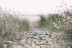 Path to the sea (V Photography and Art) Tags: lagurusovatus bunnytails bunnytailsgrass grass pebbles pov perspective pointofview low depthoffield seaside vsco dof wind sea poaceae bunnystails ukcoast coast