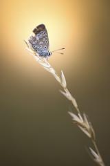 Yelow (Hexilene) Tags: proxy plante passion proxi blueribbon bokey butterfly nikon nikonpassion nature nikond750 sigma