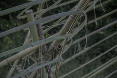 Bamboo Details (tomassinienrico) Tags: niche radura tevere tedalda badia sea zattera raft split onda waves splitt scenografia scenography bamboo movement spliffin evolution human festival dettaglii detail nodi knots