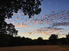 Little Fluffy Sunset Clouds (Marc Sayce) Tags: little fluffy sunset clouds interesting forest alice holt lodge hampshire farnham surrey south downs national park sky wrecclesham bucks horn oak