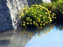 Alpine Garden (giorgiorodano46) Tags: mr giugno2010 june 2010 giorgiorodano alpinegarden pavillonrouge valledaoste valdaosta valledaosta montebianco montblanc mirror