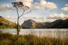 That Tree. (Tall Guy) Tags: tallguy uk lakedistrict cumbria buttermere tree