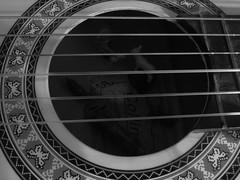 Pastorcita y cabras, en la guitarra (Xic Eseyosoyese (Juan Antonio)) Tags: pastorcita y cabras en la guitarra adentro caja de resonancias madera cuerdas juguetes playmobil leche tetilla comida pasto mariposas blanco negro monocromtico canon powershot rbol abajo perdida eseyosoyese pastorcilla geobra
