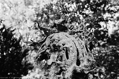 Pan the lover of nymphs (roodixx) Tags: park bw sculpture film statue bronze greek god bokeh f14 voigtlander flute bronzestatue pan 135 40mm nokton bessar3a neopan100acros voigtlandernokton40mmf14 bessar3anokton40mmf14