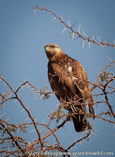 Kgalagadi Transfrontier Park - South Africa