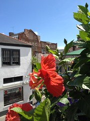Hibiscus near us (timnatl) Tags: flower neworleans hibiscus frenchquarter uneedabiscuit iphone lafittesinexile