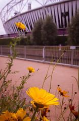 Olympic stadium (Mundialphoto) Tags: landscape sigma olympics 1020mm olympicpark paralympics flowersplants lightroom4