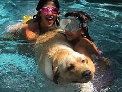 7915369144 758594bfff m Hercules, Photos of my fun Yellow Labrador