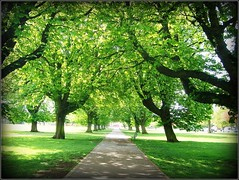 Shades Of Green . (* Janets Photos *) Tags: uk green shades hull publicparks