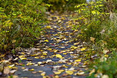 Path to the autumn (Valery Chernodedov) Tags: autumn russia path siberia ustilimsk me2youphotographylevel1