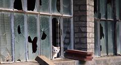 Little Kitten 2 (Imagonos) Tags: slr cat nikon outdoor fenster ruine alsace katze dslr ves elsas schüchtern mieze d90 ängstlich d3000 dslrphotography imagonos