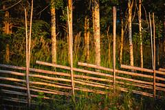 Fence (Ulf Bodin) Tags: fence sweden sverige dalarna solnedgng canonef85mmf12liiusm grdesgrd canoneos5dmarkii plintsberg dalarnasln soltgtgrden
