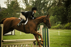 Fly (.Sami.) Tags: show horse white green jump jumping boots competition hoof rider equestrian saddle equine bridle