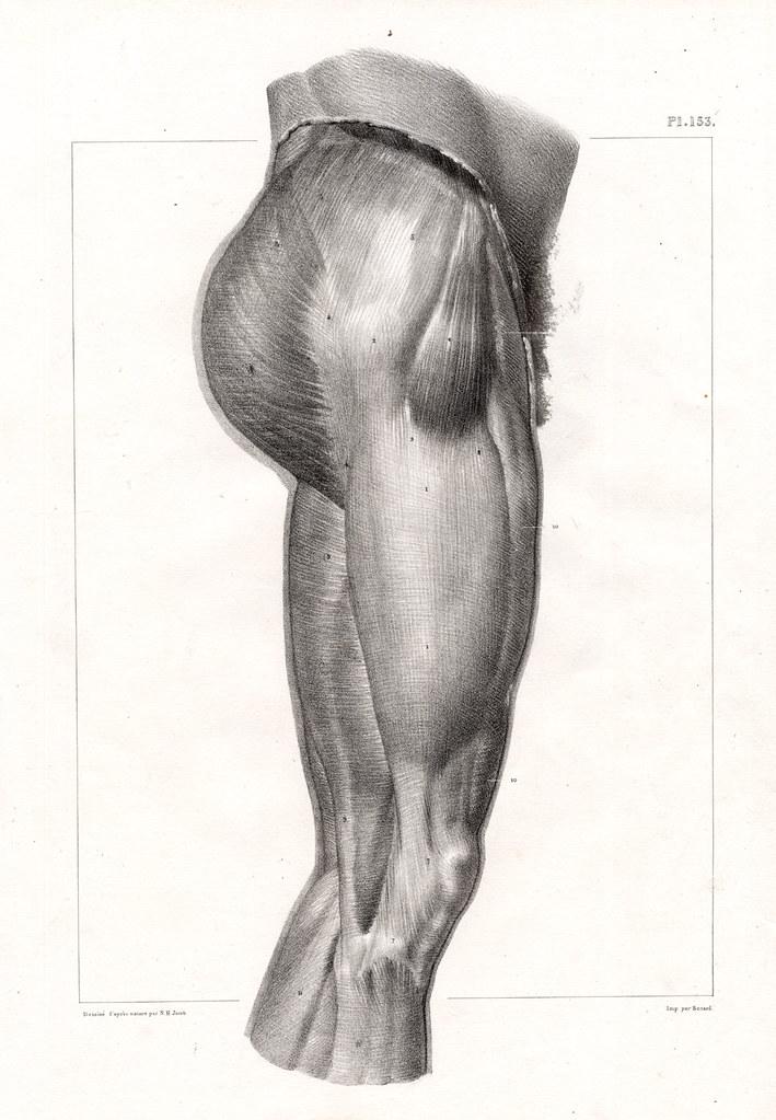 Großartig Schildkrötenpanzer Anatomie Bilder - Anatomie Ideen ...
