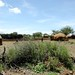 Mais uma vila Himba pelo caminho