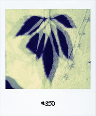 """#DailyPolaroid of 12-9-12 #350 • <a style=""""font-size:0.8em;"""" href=""""http://www.flickr.com/photos/47939785@N05/8015898535/"""" target=""""_blank"""">View on Flickr</a>"""