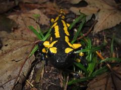 IMG_9847 (Timo.W.) Tags: pictures great salamander explore top10 darmstadt exciting rheinmain bestpictures grossumstadt saarbrücker bestcamera timowenzl