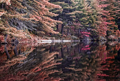 Overloaded (Twisted Reflex) Tags: autumn lake ny reflection fall st site big reserve rover canoe 12 lowes adirondack regis mountsins