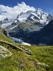 Breithorn & Gornergletscher (pierre hanquin) Tags: flowers blue light shadow summer sky cloud sun mountain snow mountains alps flower color colour nature fleur colors berg clouds fleurs montagne alpes landscape geotagged schweiz switzerland soleil nikon europa europe colours suisse couleurs
