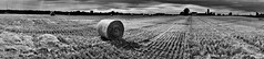 Sydenham Field (J.T.R.) Tags: bw panorama ontario canada hamilton dundas niagaraescarpment nex5 sonyalphanex5