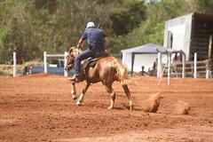 IMG_78660 (Max Hendel) Tags: horse max brasil riding cavalo equino agrotcnica equitao hendel equestriansports expotcnica provadostrstambores provados3tambores bymaxhendel tibiribaurusp maxhendel distritodetibiribaurusp esportesequestrres expotcnicaemtibiri expotcnicatibiri proofofthreebarrels proofequestrian