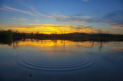Feeding Fish (Kansas Poetry (Patrick)) Tags: sunset fish lawrencekansas clintonlake abigfave patrickemerson patricknancydontthrowrocks