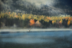 Autumns melancholy (Weirena) Tags: seasons scenes landscapes lakes weirena ireneweisz fineartphotography wallart bavaria walchensee nature fineart emotions life trees europe