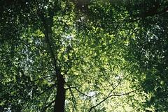 Tree (Lotte van der Krol) Tags: trees tree forest nature