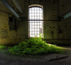 green (Captured Entropy) Tags: urbex lostplace farn fenster