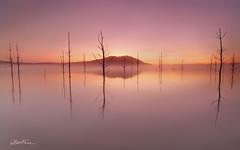 Dispersion (Ben Cue) Tags: lakesamsonvale northpinedam brisbane queensland australia canon5d gndfilter exposuremerge dawn mist fog water colour deadtrees light outdoor landscpe landscape