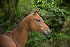 Lucia on Cosmi_c (gnarlydog) Tags: manualfocus vintagelens adaptedlens cosmicar50mmf14 cmountlens microfourthirds swirly horse austria green