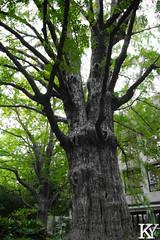 Hibiya park 14 (ZKent.Yousif) Tags: chiyodaku tkyto japan jp  chku  minatoku canon sigma sigma1750mm 50mm streetphotography street park parks