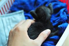 Baby baby (ambinguyennong) Tags: babycat kitty