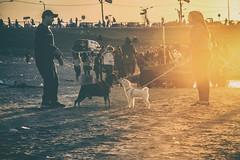 El Encuentro (Anibal Ovelar) Tags: sunset mascotas paraguay sunsetatardecersolotooasuncion costaneraatardecerasuncionpaseociudadgente people personas streetphography fotocallejera