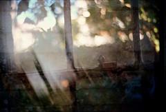 oldwindowmap (samica jones) Tags: double exposure urban nature bessa portra gloom atmosphere dream