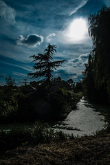 End of the day (Klaas Verweij) Tags: cloud sun fir tree trees duckweed clouds