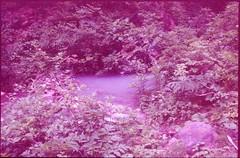 (bensn) Tags: pentax lx fa 31mm f18 limited film slide kodak ektachrome p1600x at800 japan niigata river water