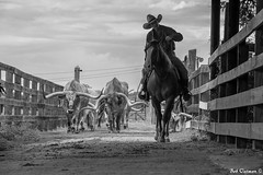 Fort Worth Stockyards (boboatman1) Tags: blackandwhite horse texas longhorn fortworth stockyards cattledrive fortworthstockyards top20blackandwhite nikond700 top20texas bestoftexas mygearandme
