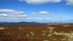 kilátás a Rozsályról / perspective (debreczeniemoke) Tags: autumn landscape perspective bilberry tájkép ősz kilátás feketeáfonya rozsály canonpowershotsx20is igniş