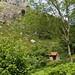 Tielve de Cabrales: pueblos de montaña Asturias
