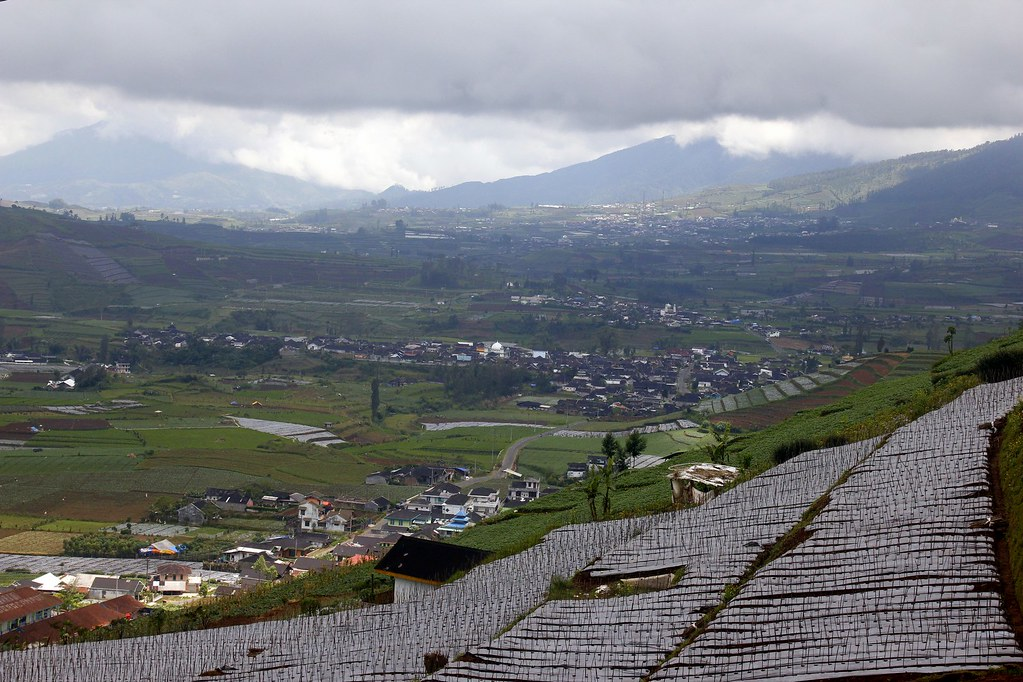 Farm crops, Dieng Plateau, Central Java, Indonesia