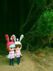Lost Rabbits