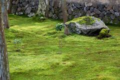 Kokedera - the Temple of Moss #25 (Christian Kaden) Tags: plant japan temple moss kyoto pflanze pflanzen arashiyama    kioto kansai moos  tempel     templeandshrines saihoji  kokedera tempelundschreine
