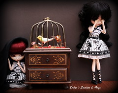 Hide and Seek (pure_embers) Tags: uk girls friends red game scarlett cute bird love dark dolls circus chest gothic queen fabric hide dresses hood pullip matching bloody seek pure lunatic anya drawers embers lullaby obitsu lunaticqueen