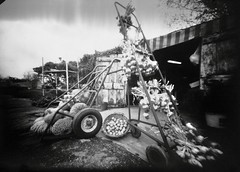 garlic, pumpkins and eggs... on the road  ;/)    - Ipertest - new camera + new negative paper in J-Nùsol FM + C recycled (schyter) Tags: bw fruits kodak pinhole epson v600 ilford 5x7 homemadecamera stenopeica multigrade camerahomemade secugnago homemadedevelopment negativepaper homemaderecipe tmaxfix jnùsolfmc deliuxtobaicoli
